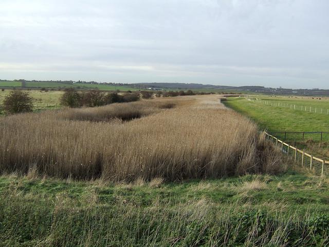 Creek on Vange Marshes