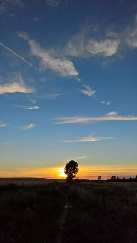 sunset solnedgång tree träd sky himmel clouds moln lumia950 outdoors sverige sweden norden nordic scandinavia skandinavien noedit nofilter