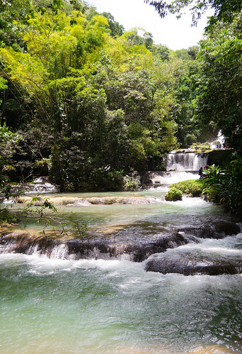 travel green jamaica nature paradise photography trees water waterfall stelizabethparish travelphotography tree forest rock landscape park