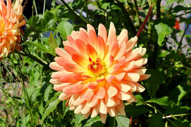 Flor a Lac Annecy.