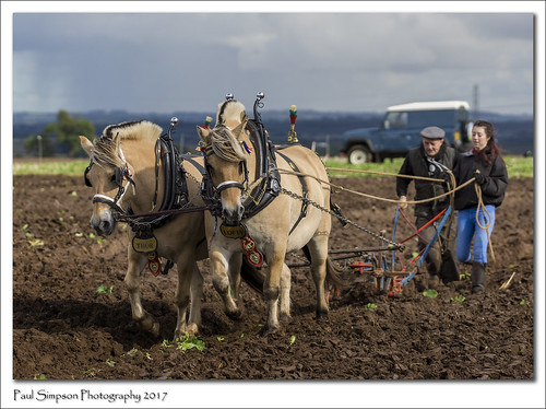 lofty thor horse horses animals farm plough ploughcontest festivaloftheplough september2017 paulsimpsonphotography sonya77 sonyphotography northlincolnshire countryside farming field retro handlers mud muddyboots muddyfield oldfashioned wayoflife historic viewsofthecountryside rural bighorses