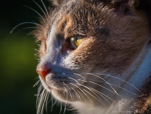 Cat gazing into the sun
