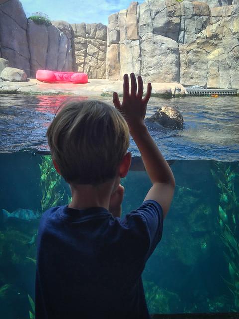 Monterey Bay Aquarium 3240