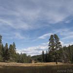 Meadow along Sportsman Lake Trail