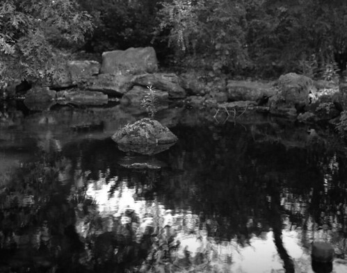 Pond in High Park