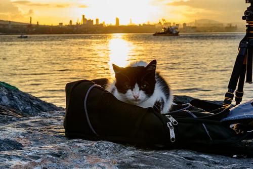 share flickrfriday cat istanbul bosphorus sunrise photography bag kitten glow reflections silhouette boat turkey travel