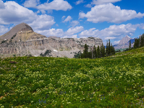 Fossil Mountain, Grand Teton, and the high plateau flowers | by snackronym