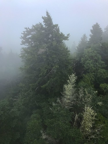 mtsterling nc wnc haywoodcounty gsmnp greatsmokymountainsnationalpark northcarolina weather fog mist trees