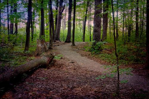 woodlandtrail path forest mudlake ottawa trees