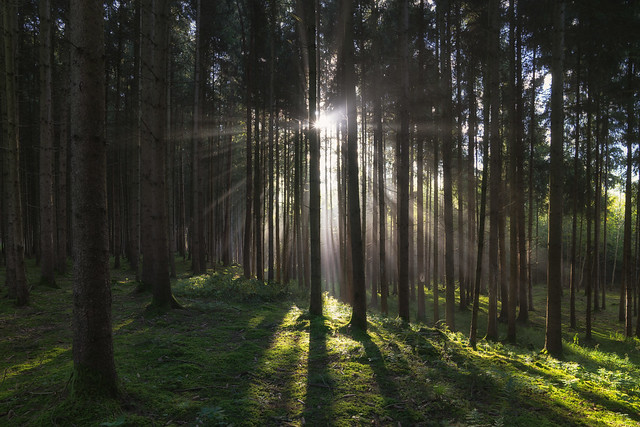 Divine Forest