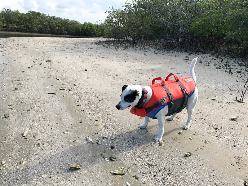 My Dog Radcliff. Fishing with Capt. Rachel Reynolds, R&R Charters, Port Orange, Daytona Beach, FL, July 14, 2017