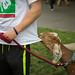 Minnesota State Fair 2017 - Day 3