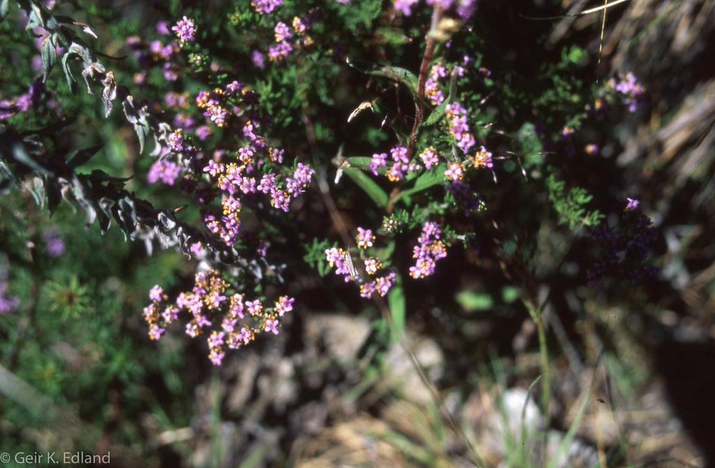 Plant sp
