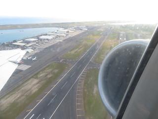 starr-170913-0191-Cocos_nucifera-takeoff_aerial_view-Airport_Honolulu-Oahu | by Starr Environmental