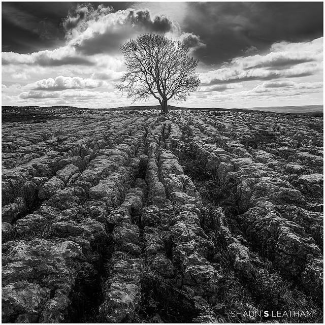 √ Tripod: Malham Lone Tree