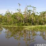 Viajefilos en la Amazonia, Peru 153