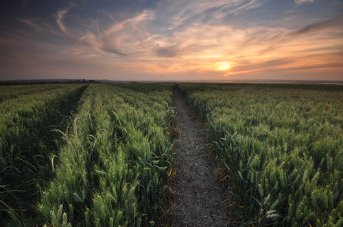 essex canewdon sunset corn smileonsaturday linesandstripes