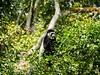 2017 - Arusha National Park - 032