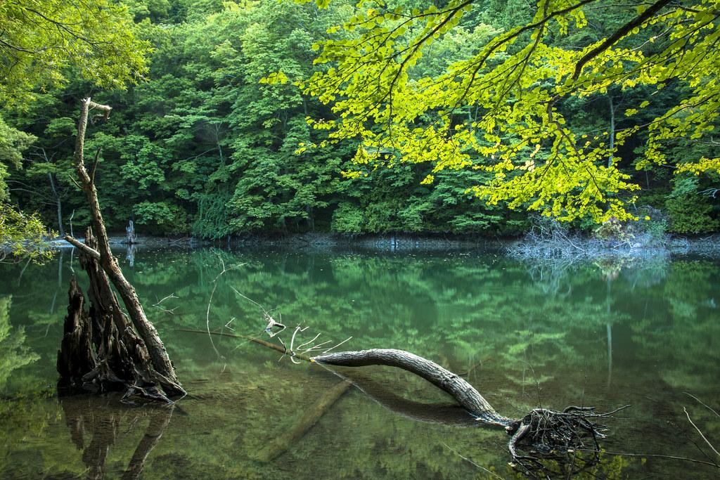 白神山地十二湖 Yasushi Miura Flickr