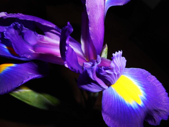 World of Flowers (14)