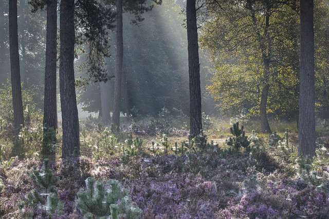 zonnestralen in het bos vanochtend - Foto: Karin Broekhuijsen