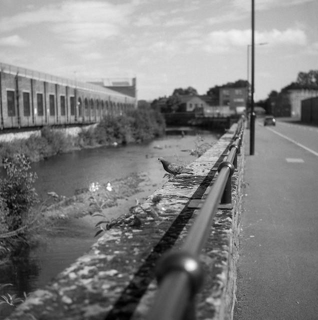 FILM - Pigeon Street