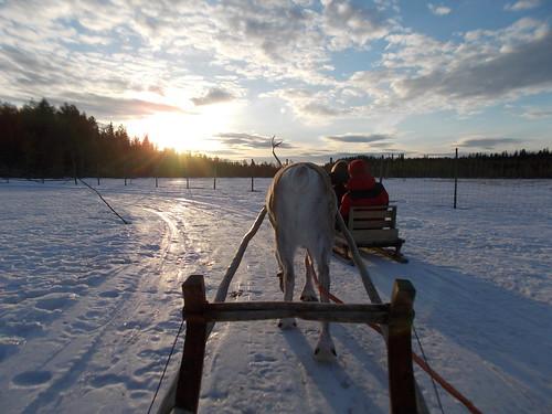 Rovaniemi (4)   by Laloe.be