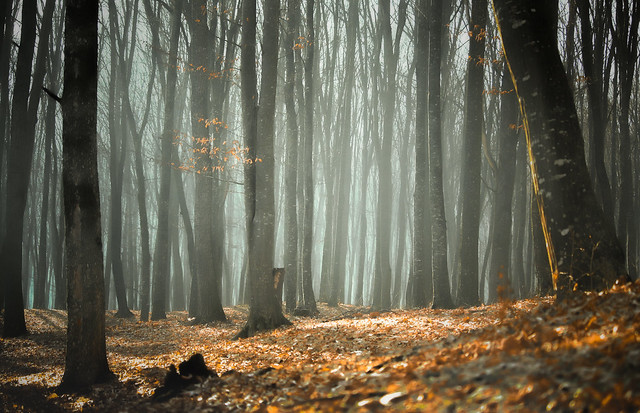 Endless woodland