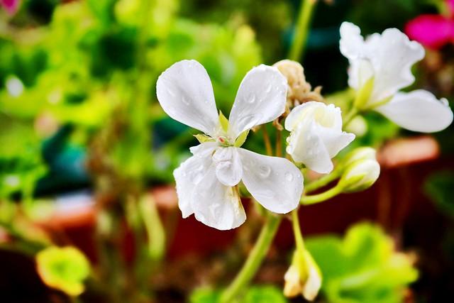 Flor a Chamonix 2.