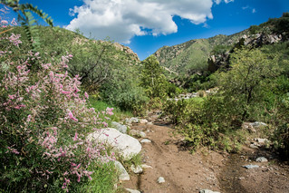 View up Box Canyon | by Jeremy Wright Photography