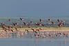 Lesser flamingo  on Lake Burungi by Hector16
