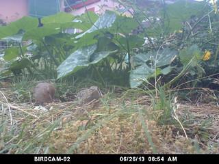 birdcam 2 birds