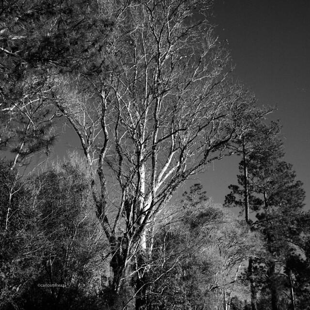 Trees and dark sky