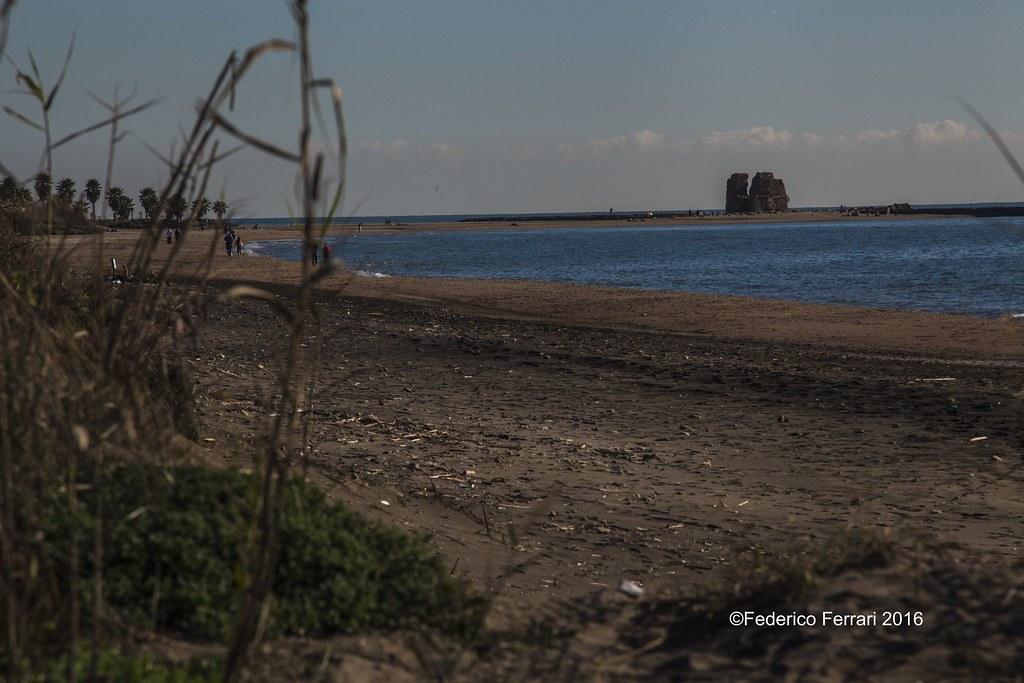 07 torre flavia   rudere spiaggia e palude mare  Phragmites australis