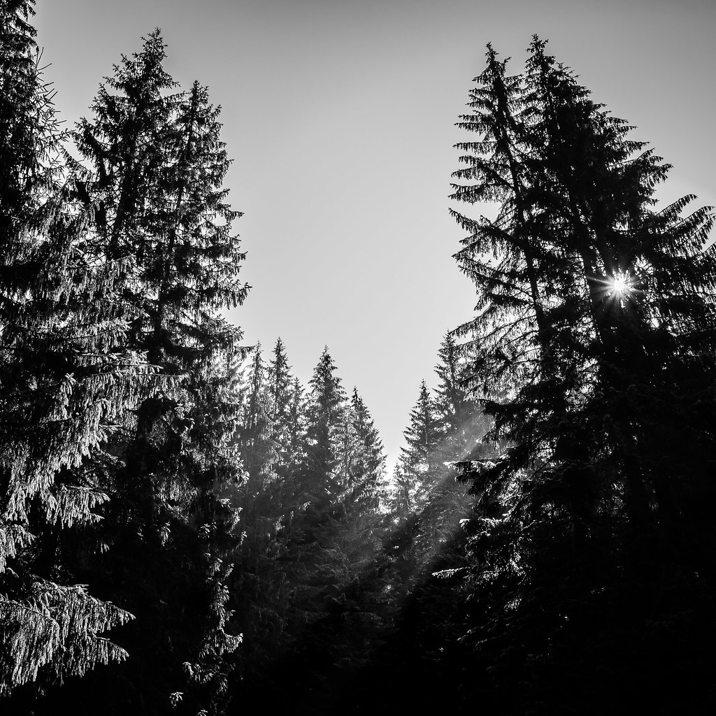 Through the trees romania black and white photography