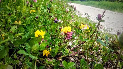 Floricele in Piatra Mare | by mergpemunte.ro