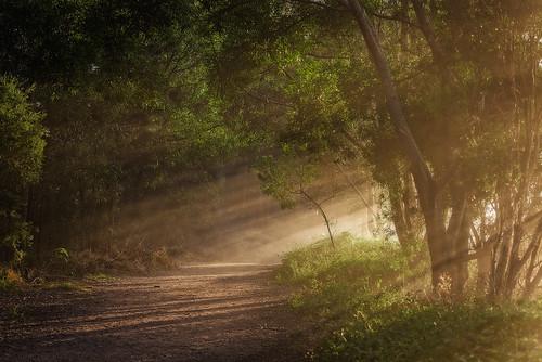 blackandwhite bw sun monochrome fog landscape sunrays raysofsun morningsun oxleycreekcommon