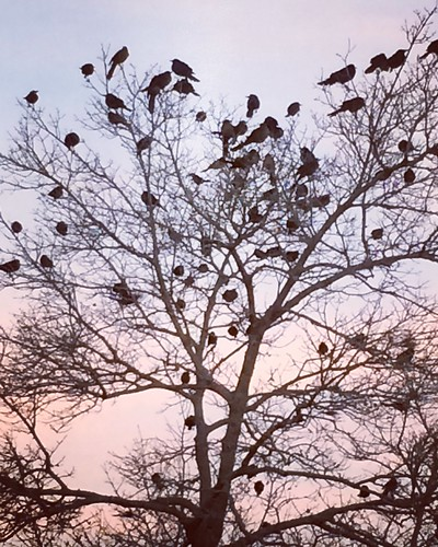 winter birds tree sunrise morning lubbock lubbocktexas