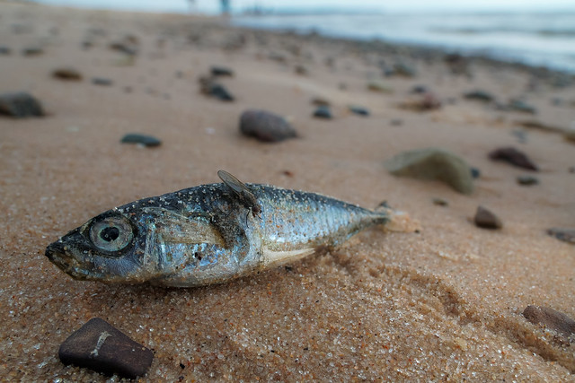 Stranded fish