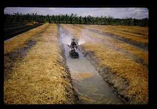 輪中の野菜畑の潅水
