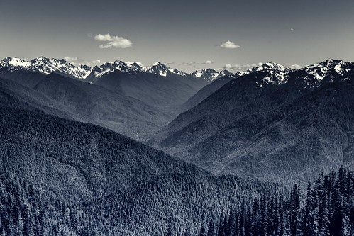 forest pinetrees pnw forests landscape washington mountains olympicpeninsula