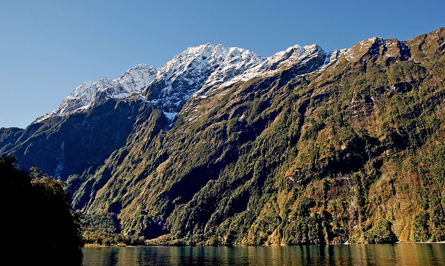Crusing on Milford Sound NZ