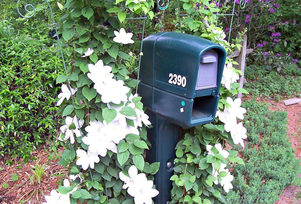 Mailbox Garden With White Clematis #9 | Snow41 | Flickr