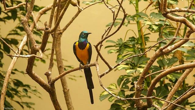 Bird Zoo Anvers - 3660
