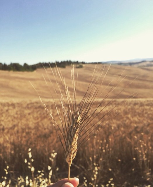 Crete Senesi view! At only 40 km from @borghettobb 😍 a true paradise! #like #follow #cretesenesi #siena #tuscany #italy #myworld #travel #landscape #enjoy #nature #discover 👍🌾
