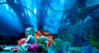 2017 - UAE - Aquarium - Tunnel Girls Dreaming I | by SeeJulesTravel