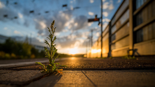 laowa15mm stuttgart münster macro makro laowa 15mm 20 zero d fe venus optics close up sony a7rii sunset sundown sunrise sun plant pflanze blume gegenlicht contralight backlit backlighting backlight wolken sonne sonnenuntergang deutschland german germany bw baden württemberg sbahn haltestelle station bahnhof