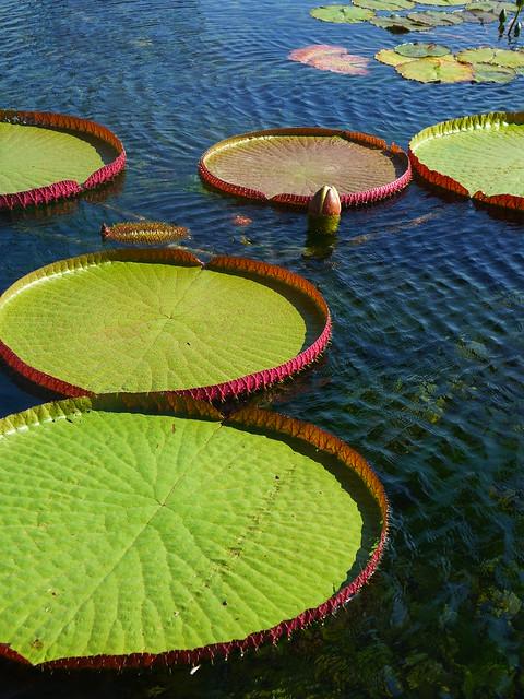 Victoria water platters