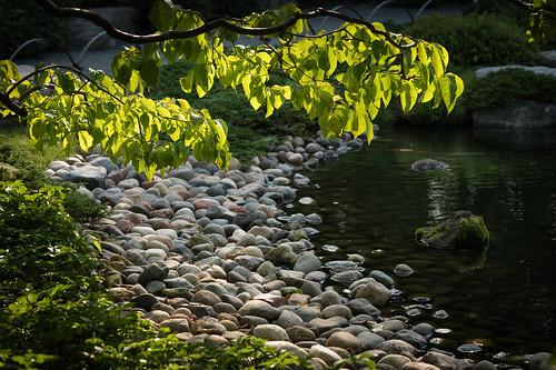 compark japanesegarden ordwayjapanesegarden saintpaul sony sonyalpha zeiss loxia2485 loxia
