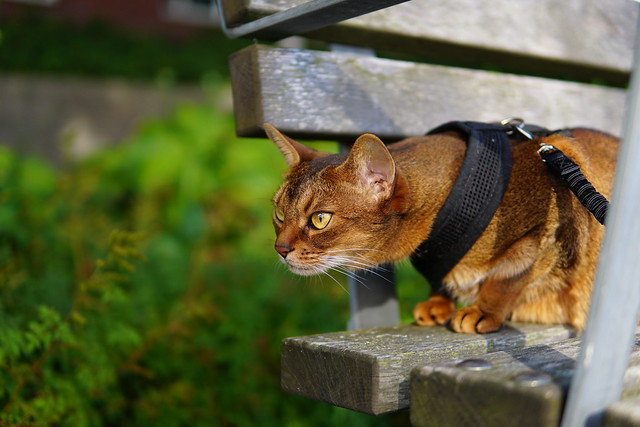 On the park bench